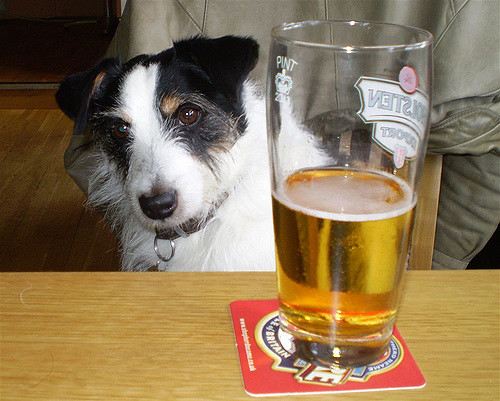 dog friendly pubs, free hall for hire, party hall, George Pub, Rochester